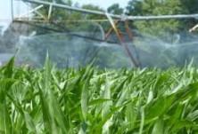 Напояване на царевица СВЕМАР ООД 3